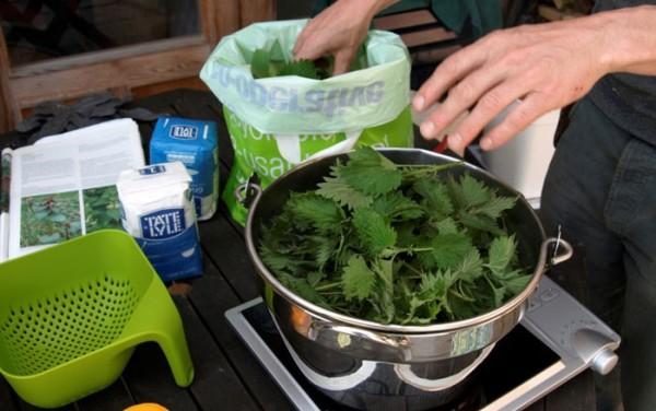 Для приготовления отвара из крапивы можно использовать свежие веточки растения или сушеные листья