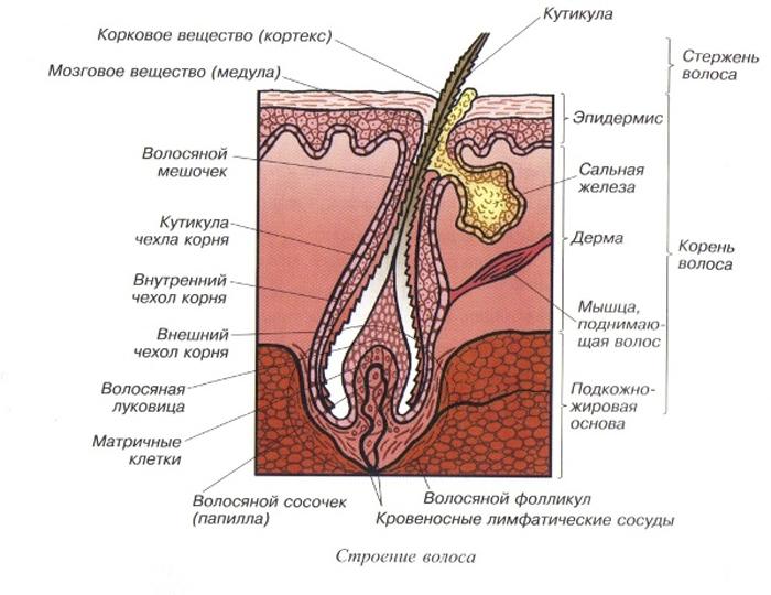 Толщина волоса в микронах