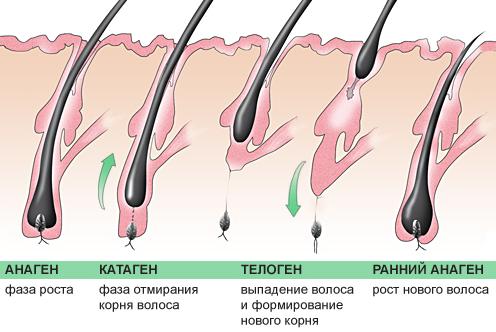 Медленно растут волосы на ногах при беременности