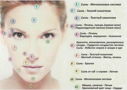 Краткая инструкция о том, как сыпь на определенном участке лица зависит от заболеваний внутренних органов