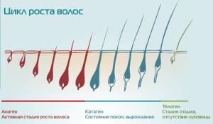 Наглядное фото-схема цикла роста волоса