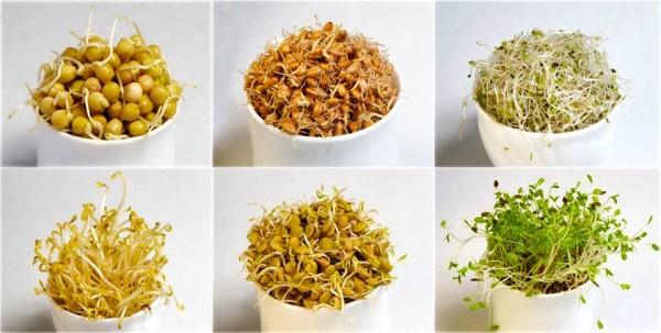 Пополнить запасы биотина можно и своими руками, включив в рацион пророщенные злаки