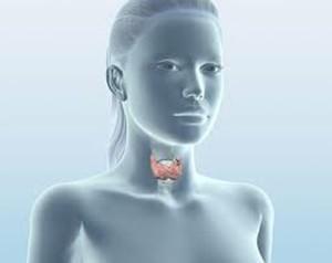 Проблемы с щитовидной железой (на фото) замедляют регенерацию волосков