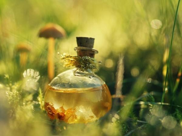Растительные масла обеспечивают поступление питательных веществ и активизацию кровообращения
