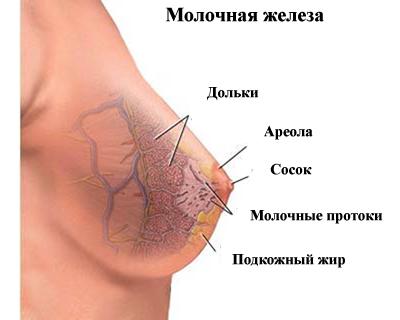 Размер ореолы у женщин