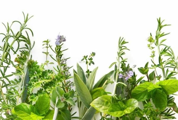 Экстракты лекарственных трав – один из основных компонентов шампуней