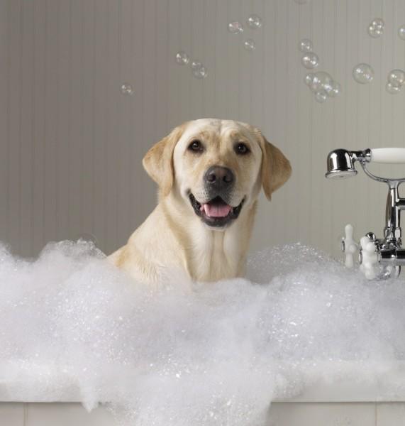 Если в доме есть домашние животные, их также нужно обработать от паразитов.