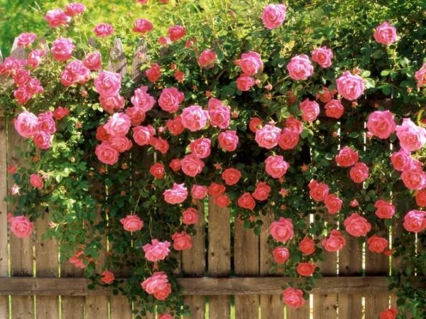 Это растение для ухода может расти у каждого в саду