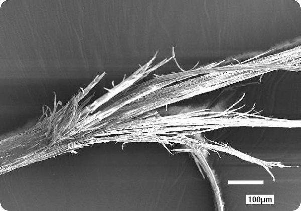 Фото секущегося волоса под микроскопом