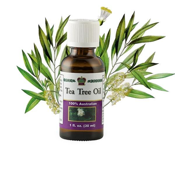 Именно масло чайного дерева быстро и наповал уничтожает этих паразитов.