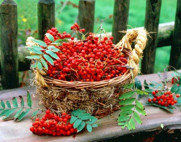 Используем плоды только с деревьев, удаленных от автомобильных трасс.