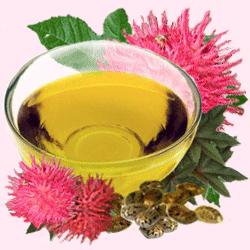 Касторка имеет очень богатый витаминно-кислотный состав