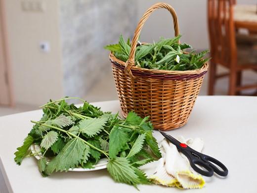 Крапива двудомная - ценное поливитаминное растение с целебными свойствами.