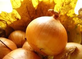 Лук – кладезь полезных веществ, микроэлементов и витаминов