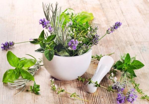 Маски для крашенных волос в домашних условиях рекомендуется готовить с использованием травяных отваров крапивы, шалфея или дубовой коры