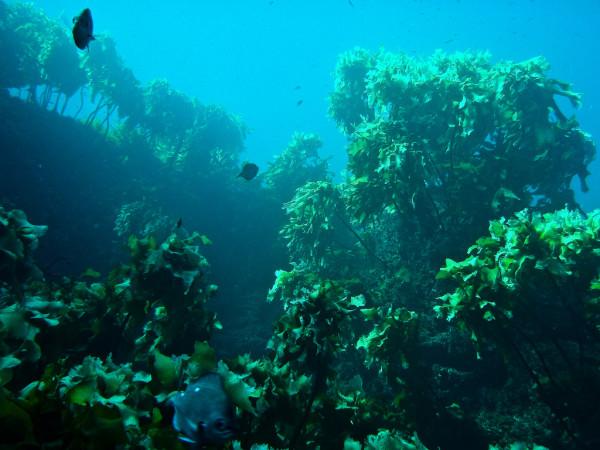 Моющие средства из Японии с добавлением морских водорослей в полной мере используют все дары природы