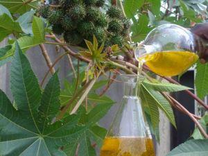 Можно приготовить касторовое масло для волос в домашних условиях, для этого очищенный корень заливают любым растительным маслом