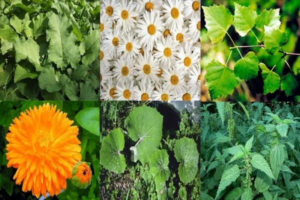 Натуральные травы – залог природной красоты!
