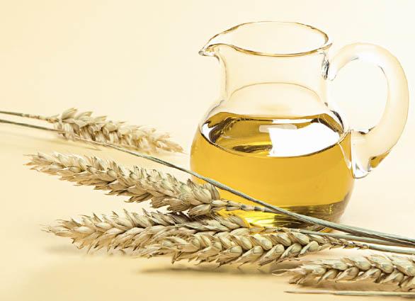 Пшеничное масло – природный концентрат питательных веществ