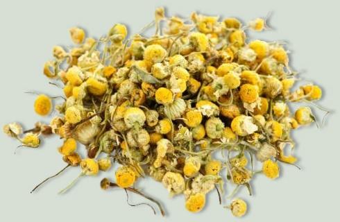 Ромашка – незаменимое растение для окрашивания и косметического ухода за волосами