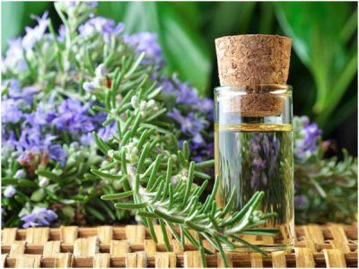 Розмариновое масло используется практически во всех косметологических средствах для локонов