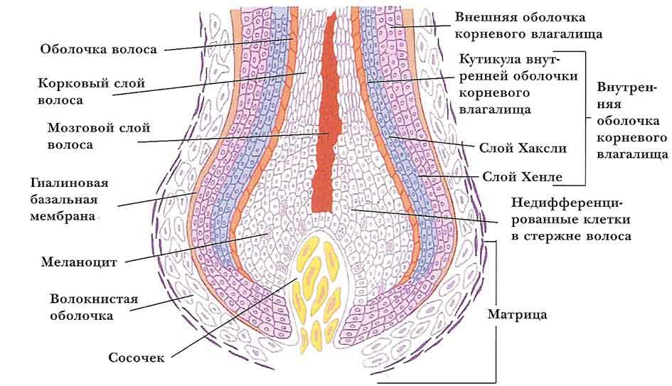 В каком возрасте растут волосы на киске у девушки, фото яйца полные спермы