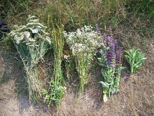 Собирать травы нужно вдали от магистралей и промышленных объектов
