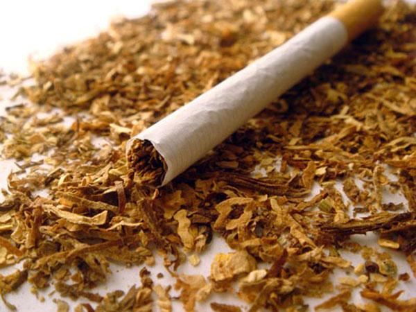Табак – польза для прически!