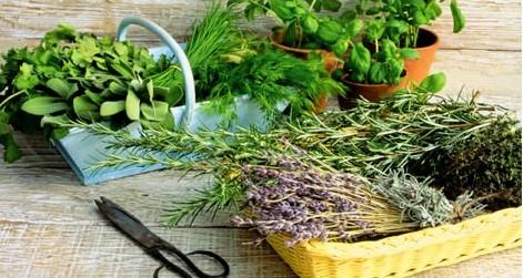 Травы можно использовать как свежие, так и сухие