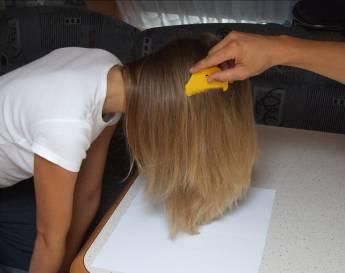 В борьбе с педикулезом при помощи шампуня вычесывание является важной процедурой. Делать этого нужно, как показано на фото, предварительно подстелить светлую ткань.