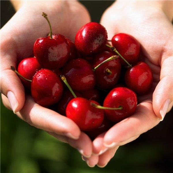 Вишня – сладкая ягода для красивой прически