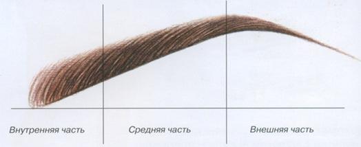 Внешняя часть брови всегда гуще и шире.