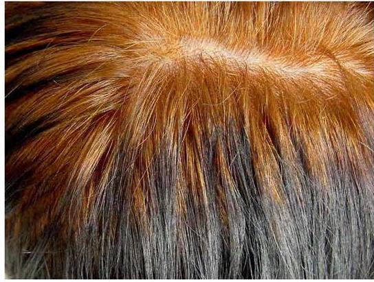 Возможный результат хны на черные волосы с сединой