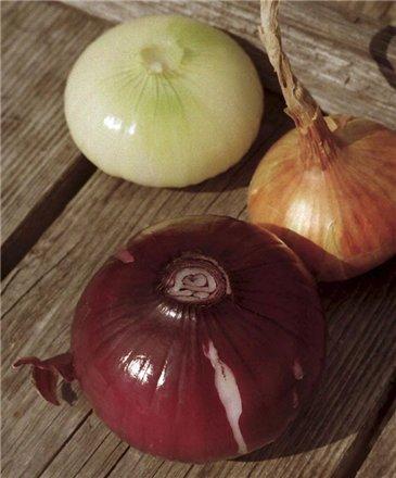 Выбираем обыкновенный репчатый лук, он самый «жгучий» и полезный