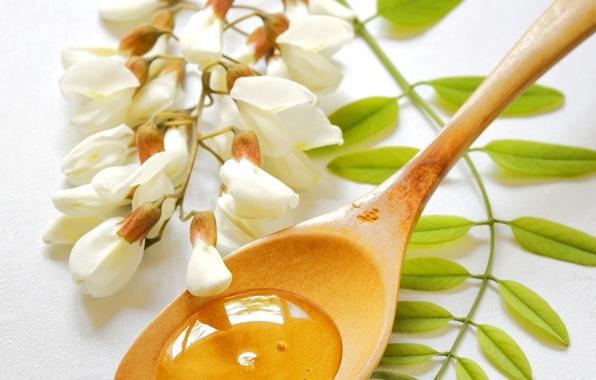 Выбирая мед, отдайте предпочтение ароматному нектару акации