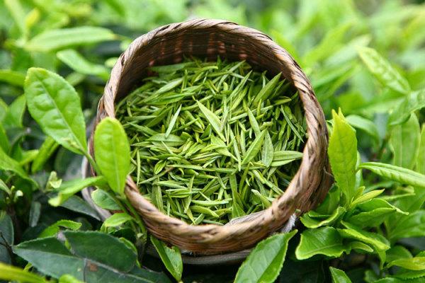Зеленый чай поможет защитить волосы